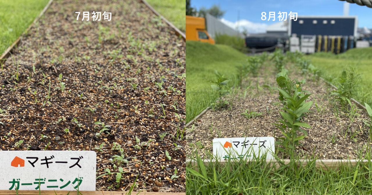 「花畑だより」最近の花畑&7月の花畑活動ご報告